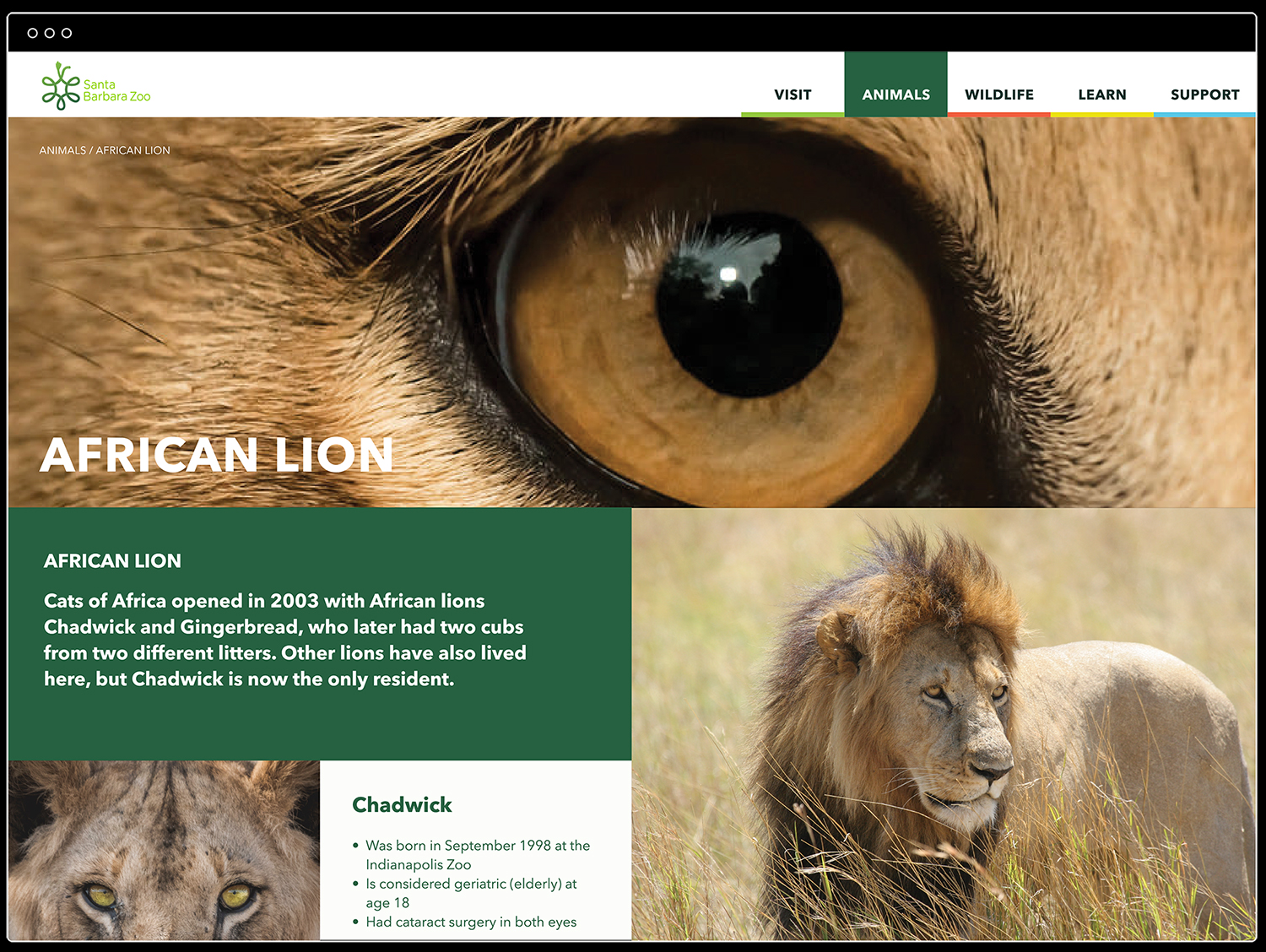SB Zoo_Website_Animals